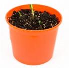 """Календула """"Азбука растений"""" набор для выращивания BONTILAND (горшочек, питательный субстрат, семена, пластиковая лопатка для рыхления)"""