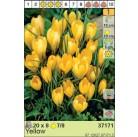 Крокусы Large Yellow (x8) 7/8 (цена за упаковку)