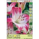 Лилии Lollypop (x2) 12/14 (цена за упаковку)