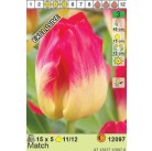 Тюльпаны  Match (x5) 11/12 (цена за шт.)