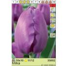 Тюльпаны Milka (x10) 11/12 (цена за шт.)