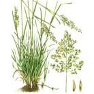 """Семена """"Мятлик луговой ENPRIMA"""" 20 кг"""