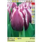 Тюльпаны Muralto (x5) 10/11 (цена за упаковку)