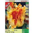 Тюльпаны Parrot King (x100) 11/12 (цена за шт.)