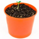 """Подсолнечник """"Азбука растений"""" набор для выращивания BONTILAND (горшочек, питательный субстрат, семена, пластиковая лопатка для рыхления)"""