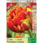 Тюльпаны Princess Unique (x100) 11/12 (цена за шт.)