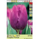 Тюльпаны Purple Prince 11/12