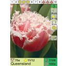 Тюльпан бахромчатый махровый Senual Touch 11/12, шт