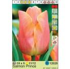 Тюльпаны  Salmon Prince (x5) 11/12 (цена за шт.)