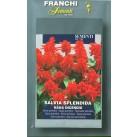 Сальвия блестящая низкая Nana Incendio (0,2 гр)  VXF348/1   Franchi Sementi