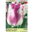 Тюльпаны Shirley Dream (x10) 11/12 (цена за шт.)