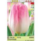 Тюльпаны Showbizz (x10) 11/12 (цена за шт.)