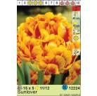 Тюльпаны Sunlover (x5) 11/12 (цена за шт.)