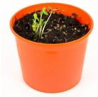 """Цинния """"Азбука растений"""" набор для выращивания BONTILAND (горшочек, питательный субстрат, семена, пластиковая лопатка для рыхления)"""