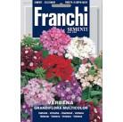 Вербена крупноцветковая Grandiflora, смесь (1 гр)  VXF 354/1   Franchi Sementi