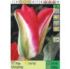 Тюльпаны Virichic (x100) 11/12 (цена за шт.)