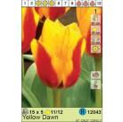 Тюльпаны  Yellow Dawn (x5) 11/12 (цена за шт.)