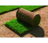 Рулонный газон, с укладкой по г.Алматы